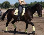 Harys Horse