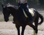 Harys Horse2