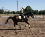 Harys Horse3