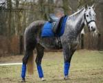 Manti Anky Olympia Blue