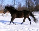 6. Lancelot ZIMA 2011/12