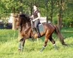 7. Lancelot - WIOSNA / LATO jeździecko 2012r.
