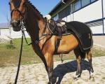 Konie CH