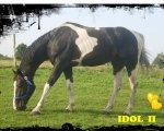 Idol II