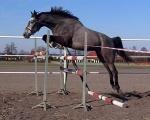 Konie sprzedane - rocznik 2009