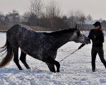 Zima 2010 fot. Dorota Klinowska