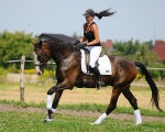Konie sprzedane - rocznik 2008