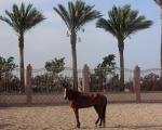 Konie w innych krajach