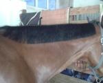 Fryzjerstwo końskie