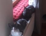 Potwory i kot ;-)
