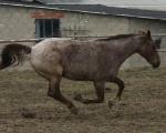 konie 2011